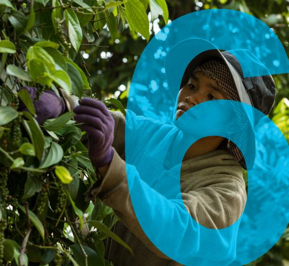 6. farm worker picking berries from a tree